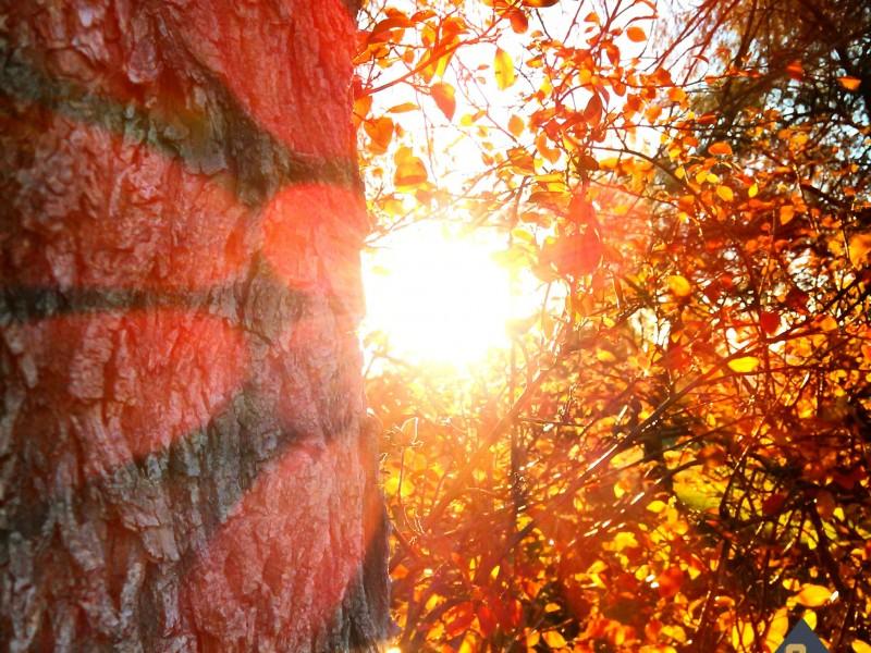 lens flare autumn_10.22.14