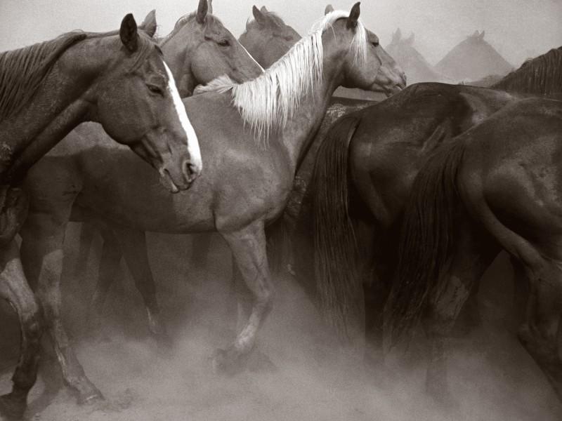 Adam_Jahiel_Remuda_Spanish_Ranch